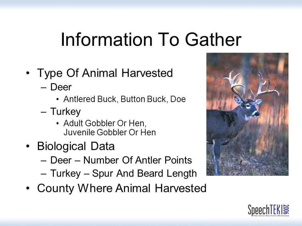 Information To Gather Type Of Animal Harvested –Deer Antlered Buck, Button Buck, Doe –Turkey Adult Gobbler Or Hen, Juvenile Gobbler Or Hen Biological Data –Deer – Number Of Antler Points –Turkey – Spur And Beard Length County Where Animal Harvested