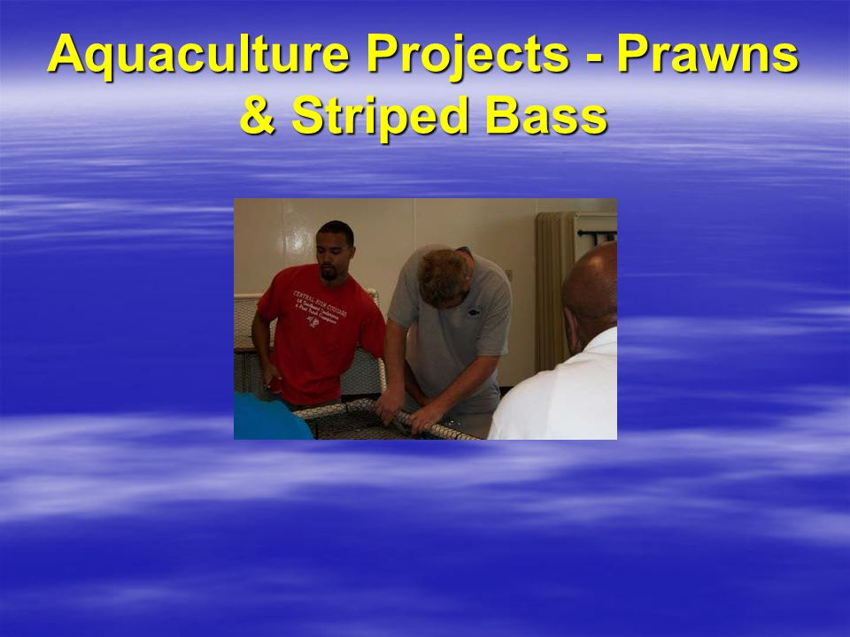 Aquaculture Projects - Prawns & Striped Bass
