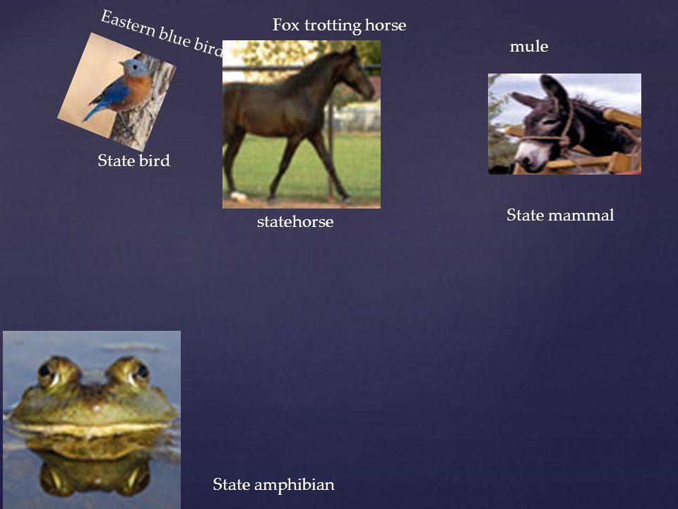 State bird Eastern blue bird State mammal mule statehorse Fox trotting horse State amphibian