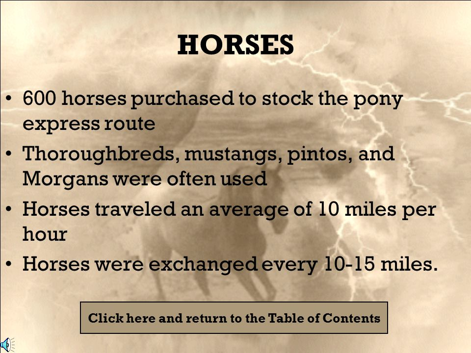 HORSES 600 horses purchased to stock the pony express route Thoroughbreds, mustangs, pintos, and Morgans were often used Horses traveled an average of 10 miles per hour Horses were exchanged every 10-15 miles.