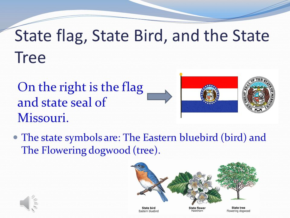 State flag, State Bird, and the State Tree The state symbols are: The Eastern bluebird (bird) and The Flowering dogwood (tree).