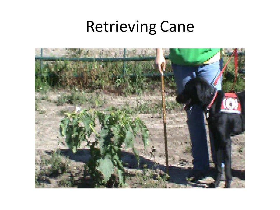 Retrieving Cane