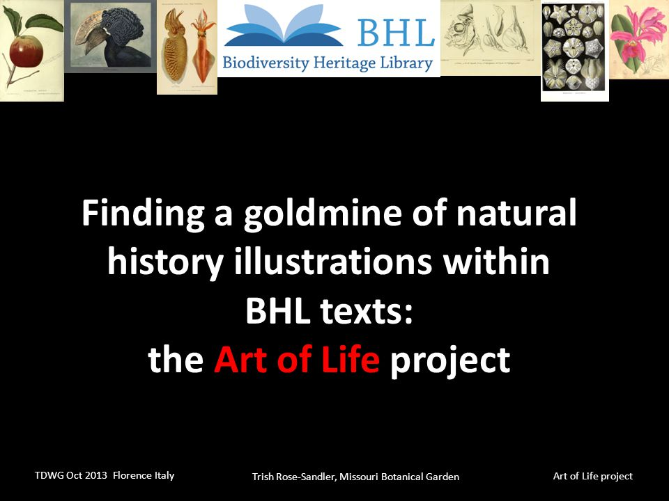 Trish Rose-Sandler, Missouri Botanical Garden TDWG Oct 2013 Florence Italy Art of Life project BHL Problem statement – users want access to images, access to images is limited – How to broaden the audiences for BHL content?