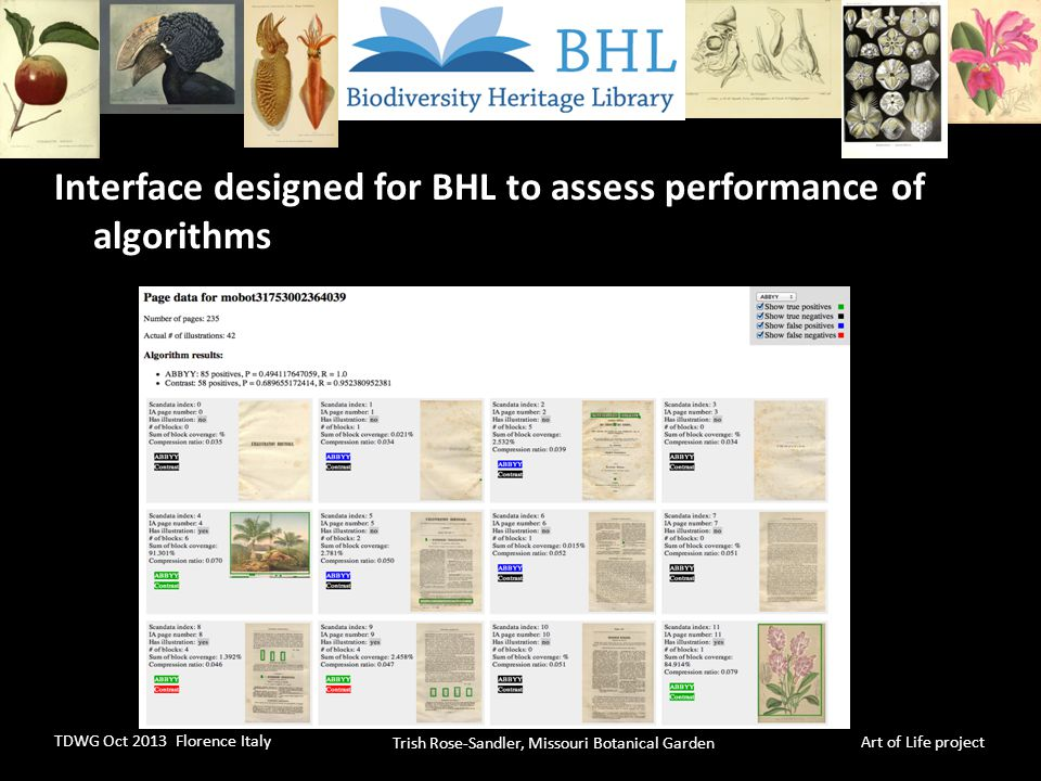 Trish Rose-Sandler, Missouri Botanical Garden TDWG Oct 2013 Florence Italy Art of Life project Interface designed for BHL to assess performance of algorithms