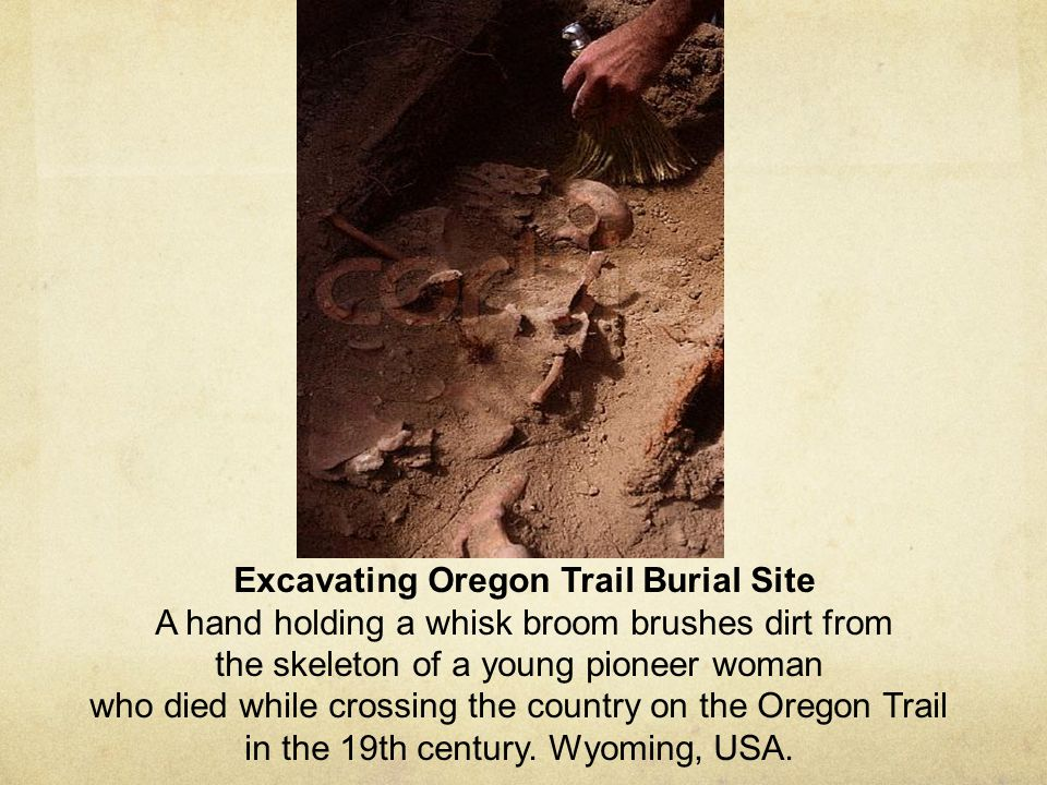 Excavating Oregon Trail Burial Site A hand holding a whisk broom brushes dirt from the skeleton of a young pioneer woman who died while crossing the c