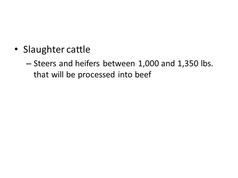 Slaughter cattle – Steers and heifers between 1,000 and 1,350 lbs. that will be processed into beef
