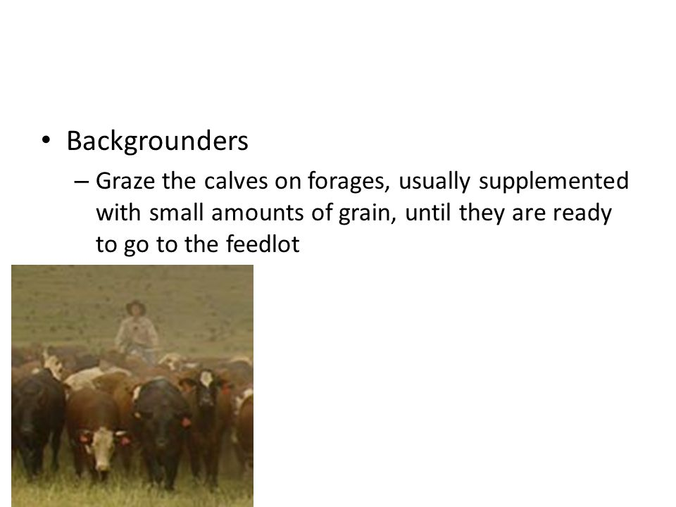 Backgrounders – Graze the calves on forages, usually supplemented with small amounts of grain, until they are ready to go to the feedlot