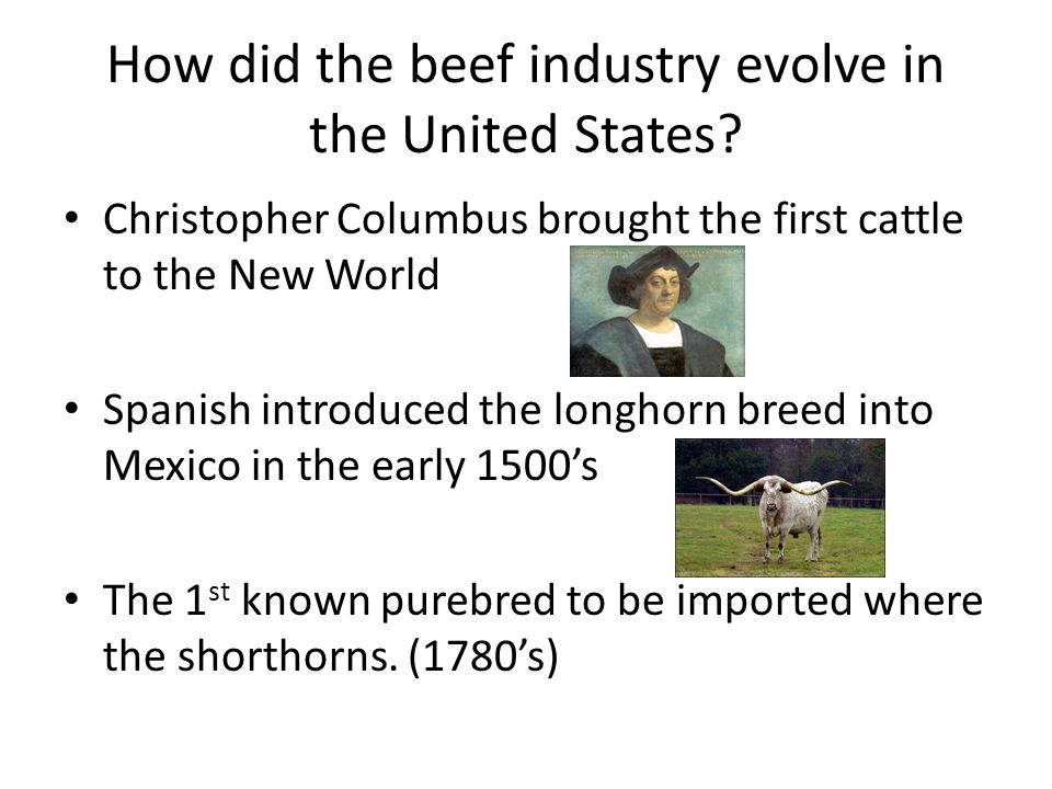 Segments of the beef industry Purebred breeders – Produce genetically superior females and herd bulls to be used by commercial cow/calf producers to improve their stock