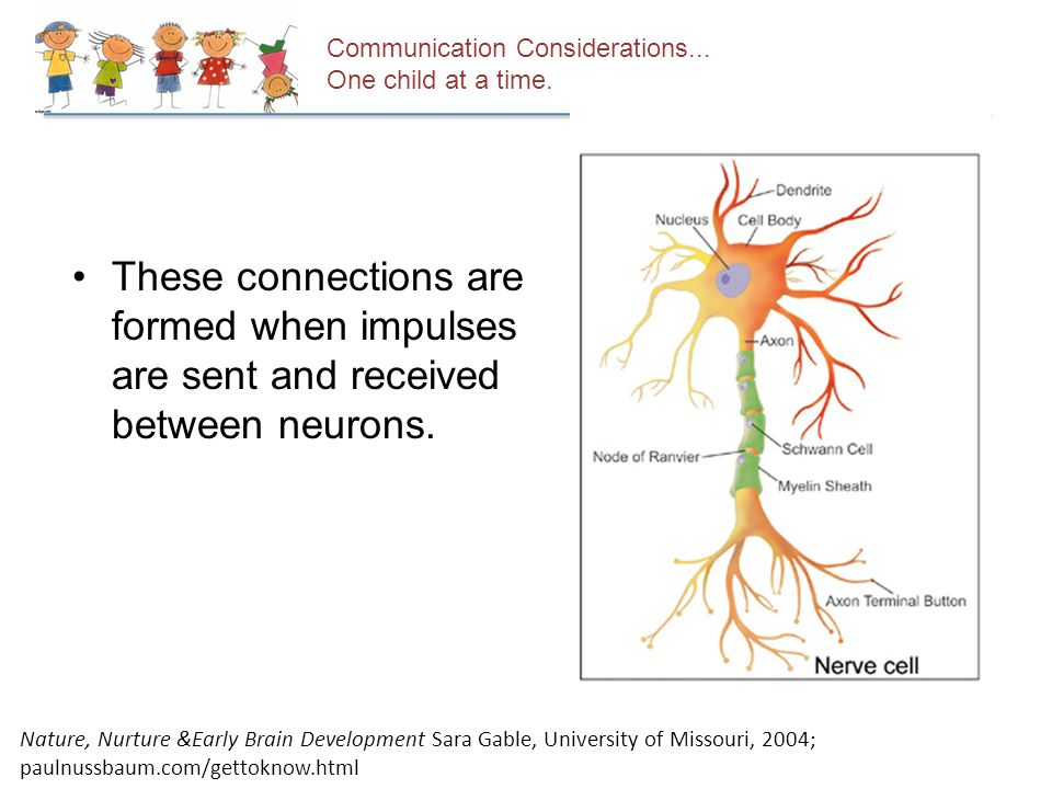 Communication Considerations... One child at a time. These connections are formed when impulses are sent and received between neurons. Nature, Nurture