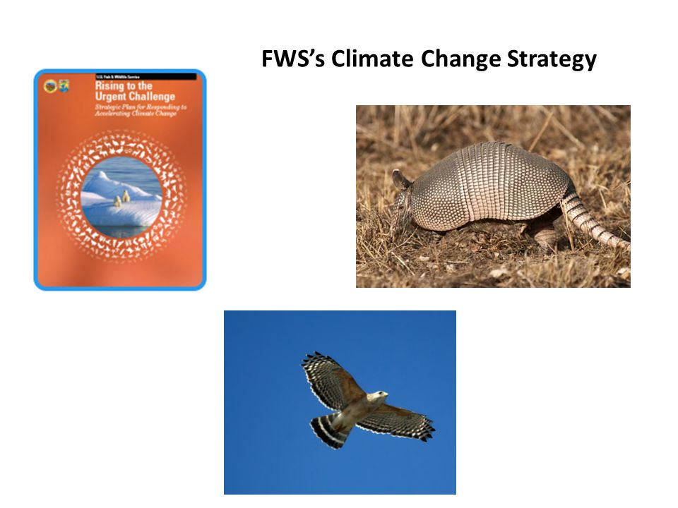 FWS's Climate Change Strategy