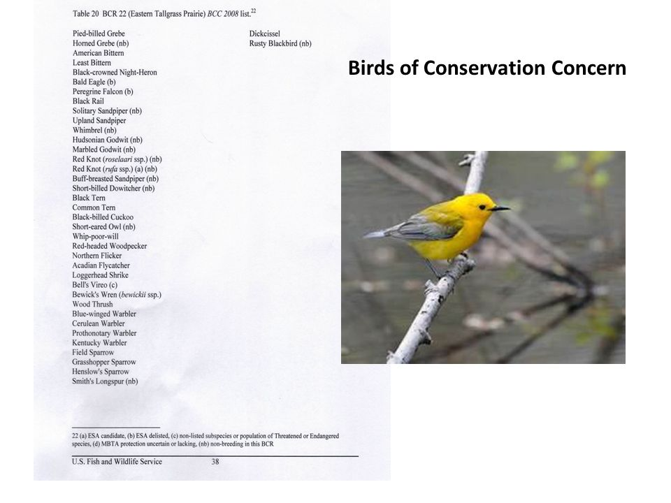Birds of Conservation Concern