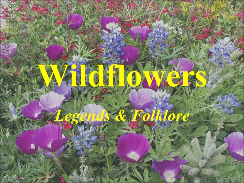 Wildflowers Legends & Folklore