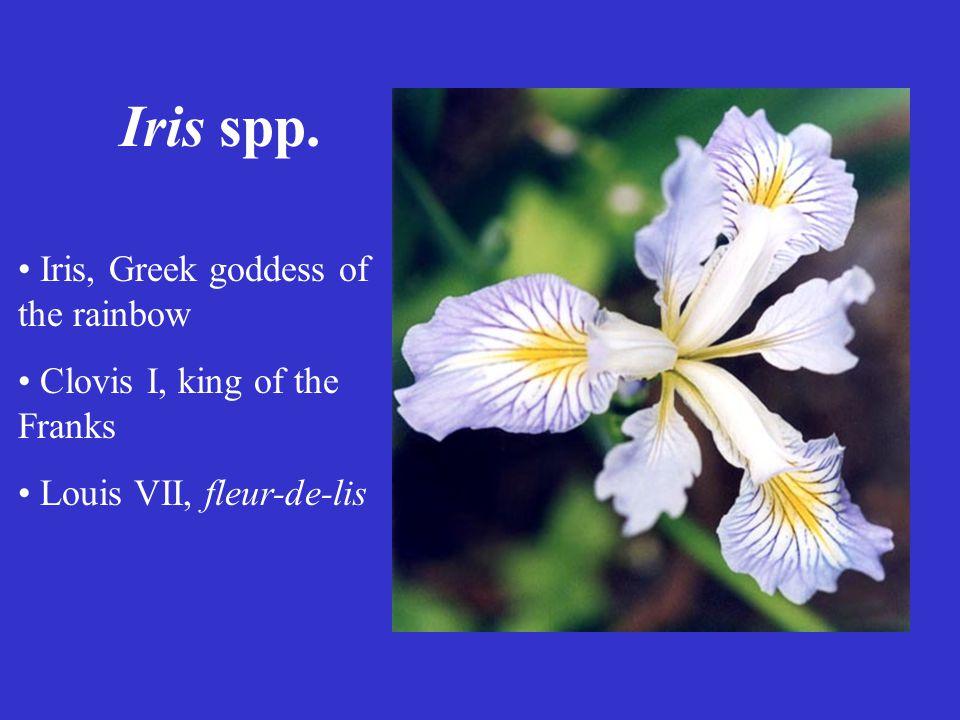 Iris spp. Iris, Greek goddess of the rainbow Clovis I, king of the Franks Louis VII, fleur-de-lis