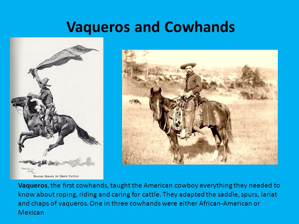 Vaqueros and Cowhands Vaqueros, the first cowhands, taught the American cowboy everything they needed to know about roping, riding and caring for catt