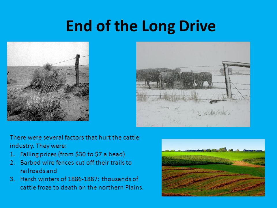 End of the Long Drive There were several factors that hurt the cattle industry. They were: 1.Falling prices (from $30 to $7 a head) 2.Barbed wire fenc