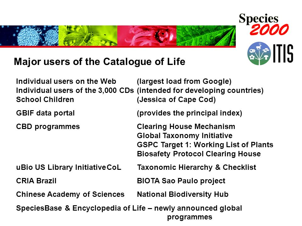 Major users of the Catalogue of Life Individual users on the Web (largest load from Google) Individual users of the 3,000 CDs(intended for developing countries) School Children(Jessica of Cape Cod) GBIF data portal (provides the principal index) CBD programmesClearing House Mechanism Global Taxonomy Initiative GSPC Target 1: Working List of Plants Biosafety Protocol Clearing House uBio US Library InitiativeCoL Taxonomic Hierarchy & Checklist CRIA BrazilBIOTA Sao Paulo project Chinese Academy of SciencesNational Biodiversity Hub SpeciesBase & Encyclopedia of Life – newly announced global programmes