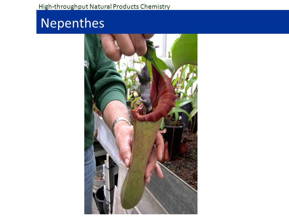 High-throughput Natural Products Chemistry Nepenthes