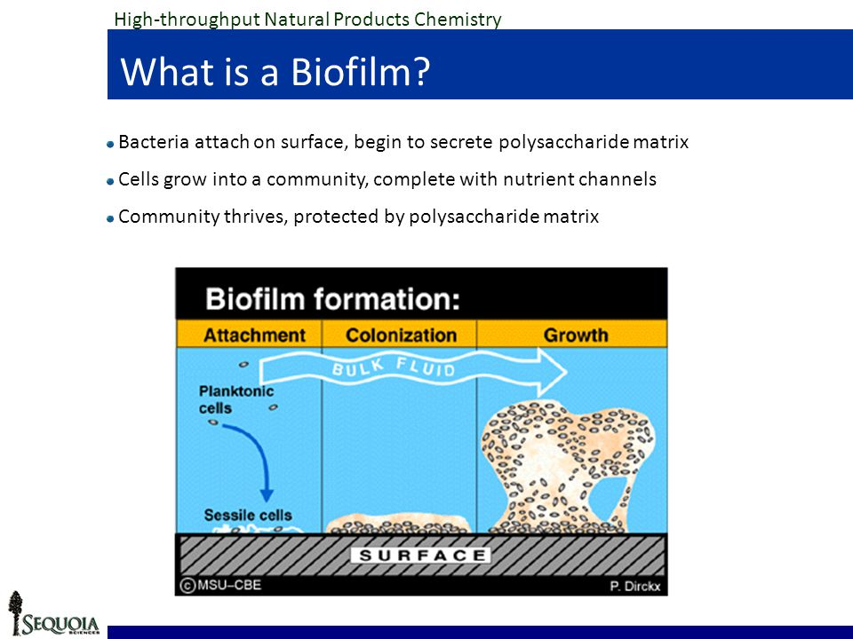 High-throughput Natural Products Chemistry What is a Biofilm.