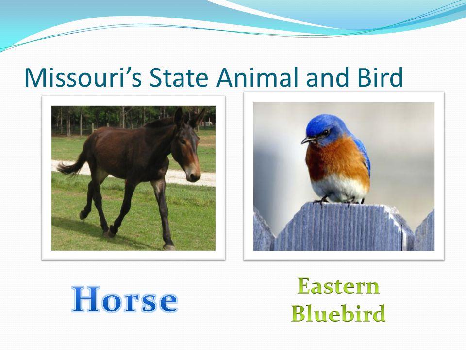 Missouri's State Animal and Bird