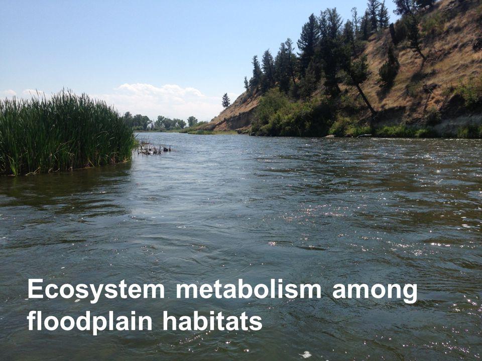Ecosystem metabolism among floodplain habitats