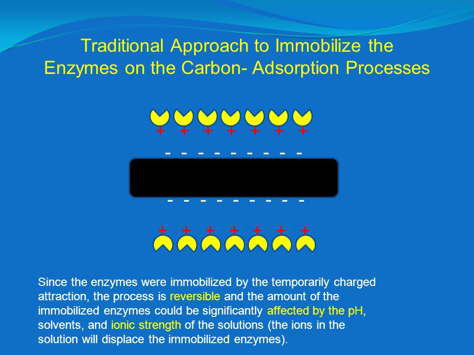 ++++++ + ++++++ + - - - - - - - - - Traditional Approach to Immobilize the Enzymes on the Carbon- Adsorption Processes Since the enzymes were immobilized by the temporarily charged attraction, the process is reversible and the amount of the immobilized enzymes could be significantly affected by the pH, solvents, and ionic strength of the solutions (the ions in the solution will displace the immobilized enzymes).