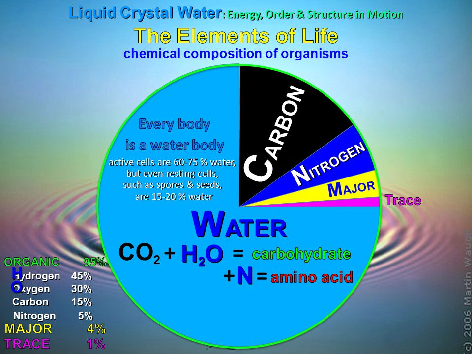 WATER H2O N ITROGEN M AJOR Hydrogen45% Oxygen30% H O Carbon15% CO 2 C + = Nitrogen5% + N = chemical composition of organisms C ARBON active cells are 60-75 % water, but even resting cells, such as spores & seeds, are 15-20 % water Liquid Crystal Water : Energy, Order & Structure in Motion