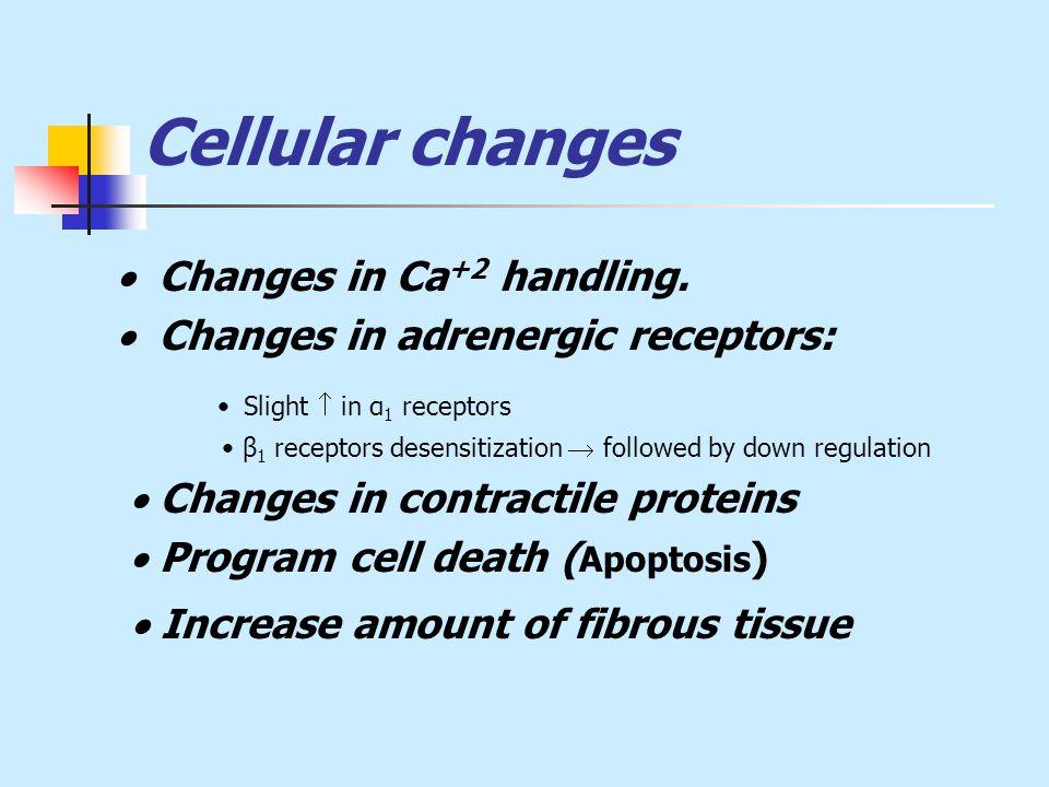 Cellular changes  Changes in Ca +2 handling.