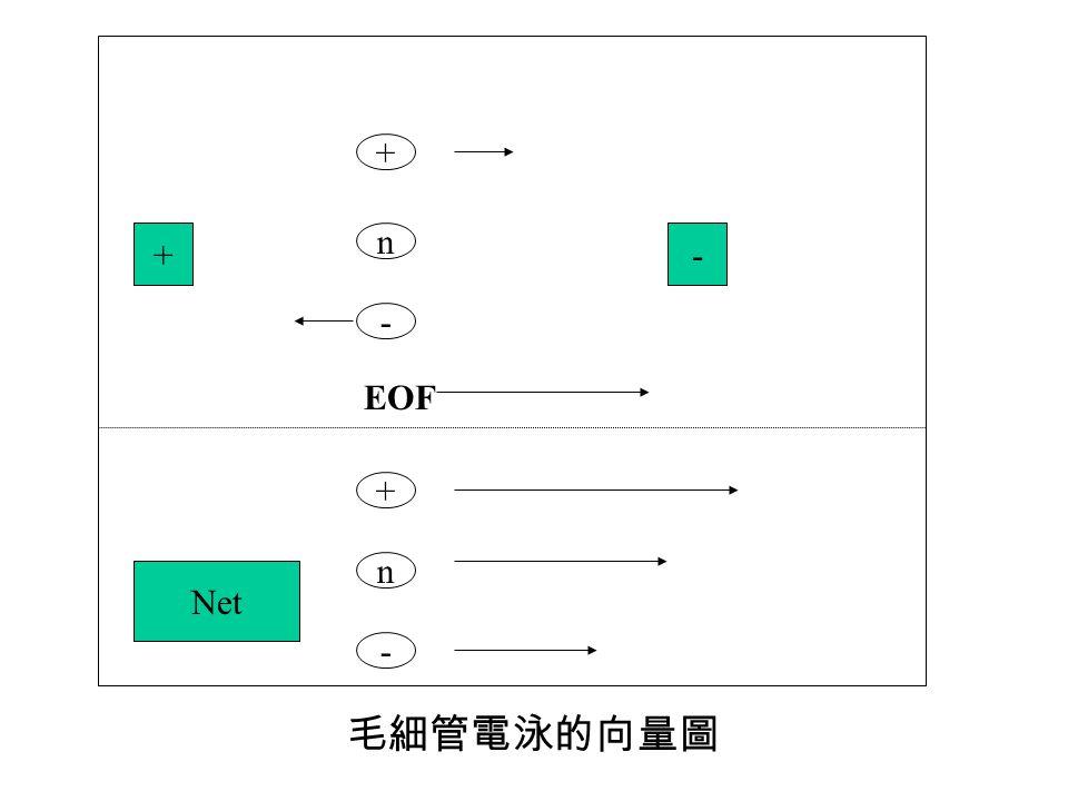 + - n EOF -+ + n - Net 毛細管電泳的向量圖