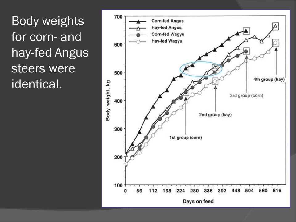 Body weights for corn- and hay-fed Angus steers were identical.