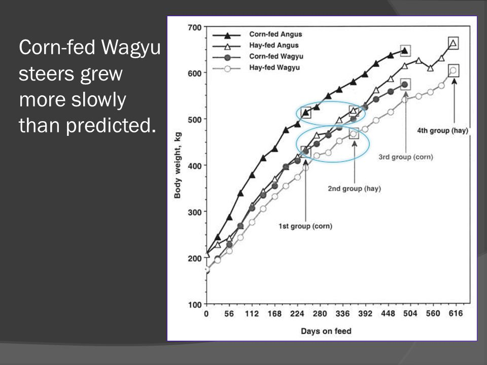 Corn-fed Wagyu steers grew more slowly than predicted.