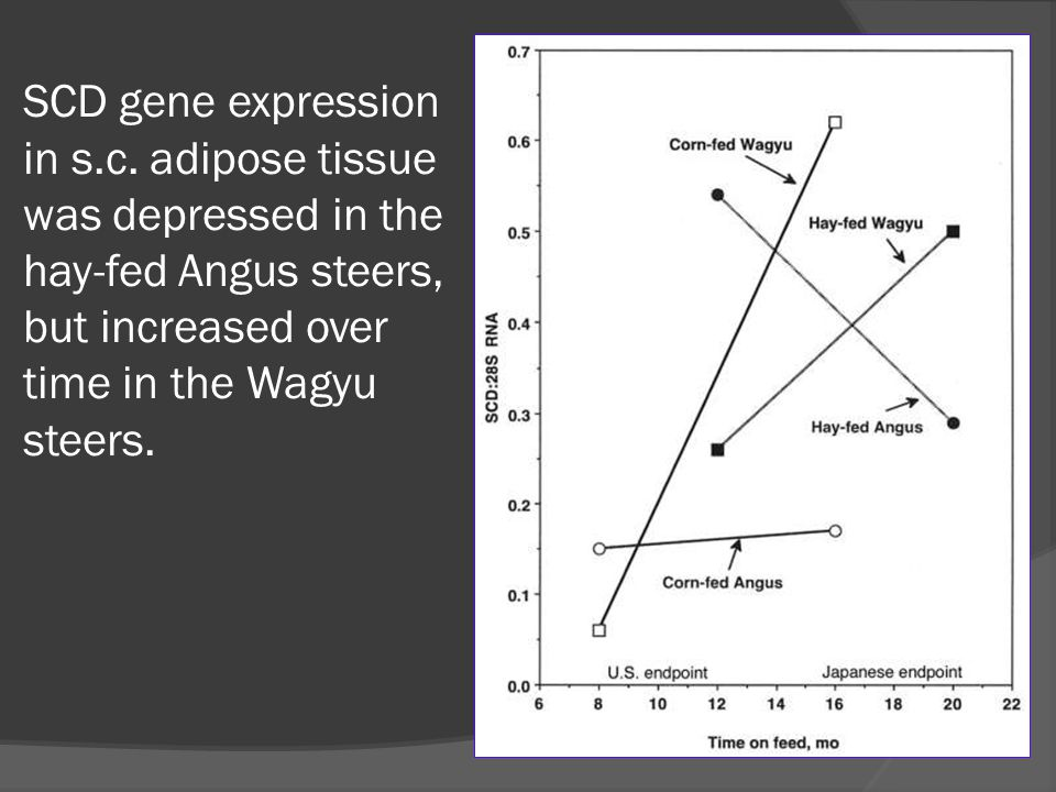 SCD gene expression in s.c. adipose tissue was depressed in the hay-fed Angus steers, but increased over time in the Wagyu steers.