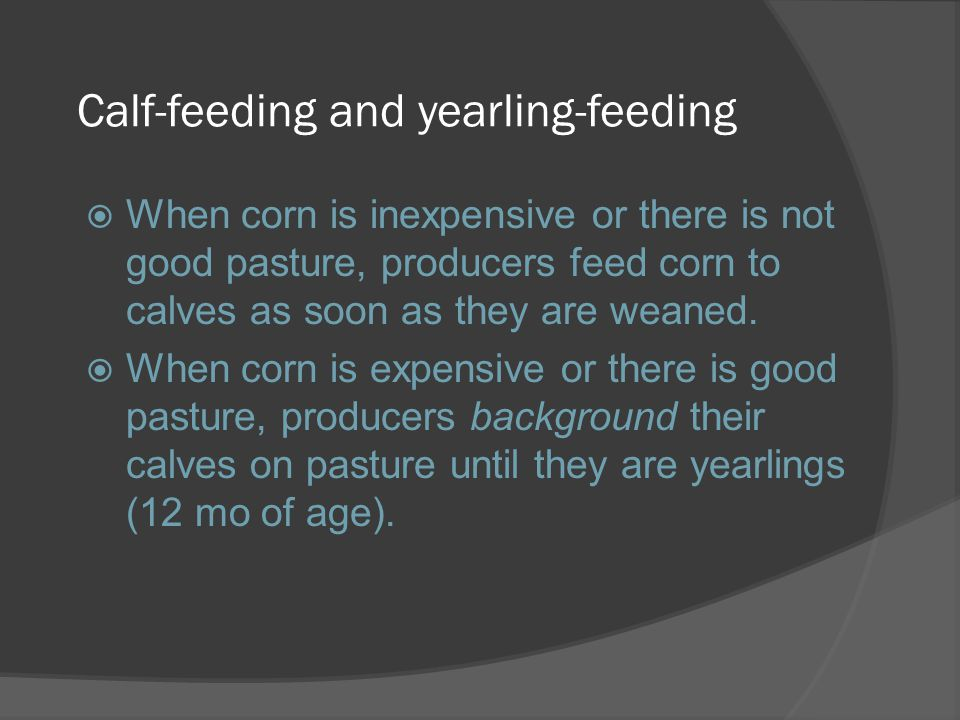 Calf-feeding and yearling-feeding  When corn is inexpensive or there is not good pasture, producers feed corn to calves as soon as they are weaned. 