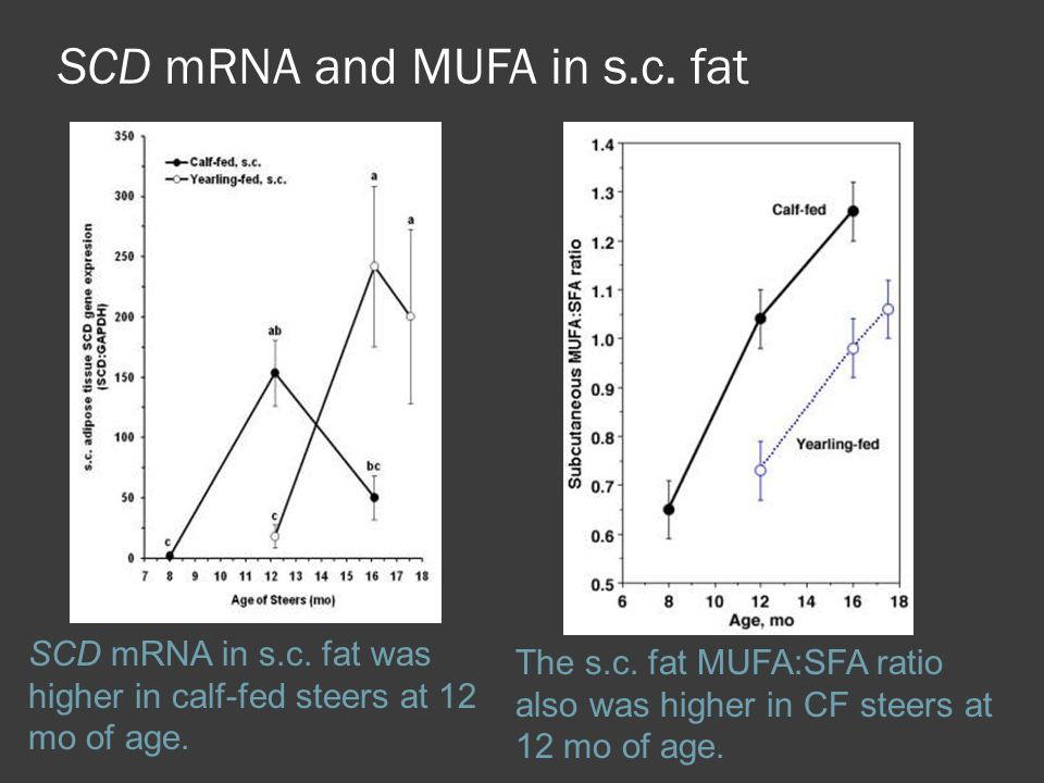 SCD mRNA and MUFA in s.c. fat SCD mRNA in s.c. fat was higher in calf-fed steers at 12 mo of age. The s.c. fat MUFA:SFA ratio also was higher in CF st