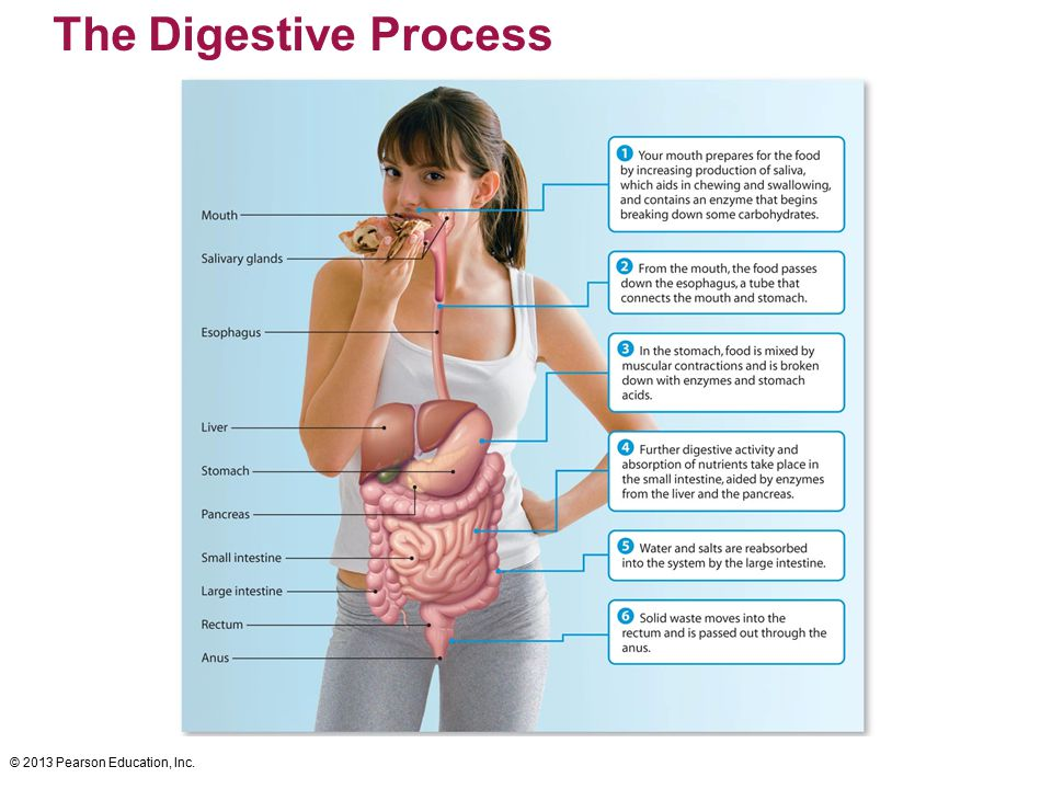 © 2013 Pearson Education, Inc. The Digestive Process