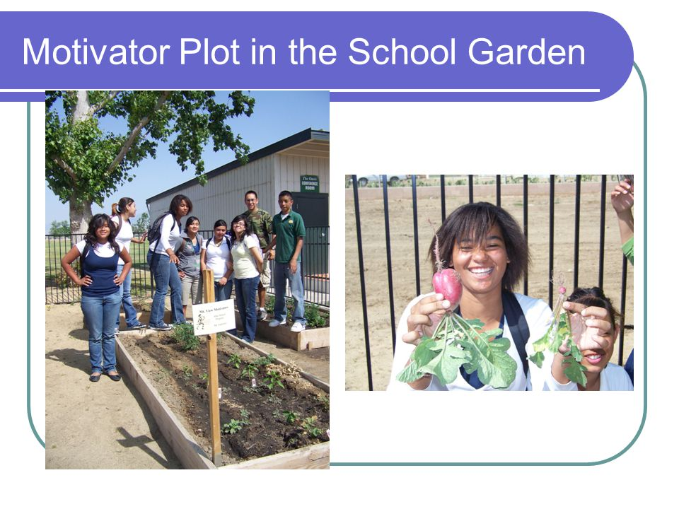 Motivator Plot in the School Garden