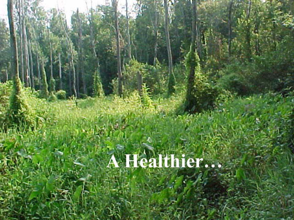 A Healthier…