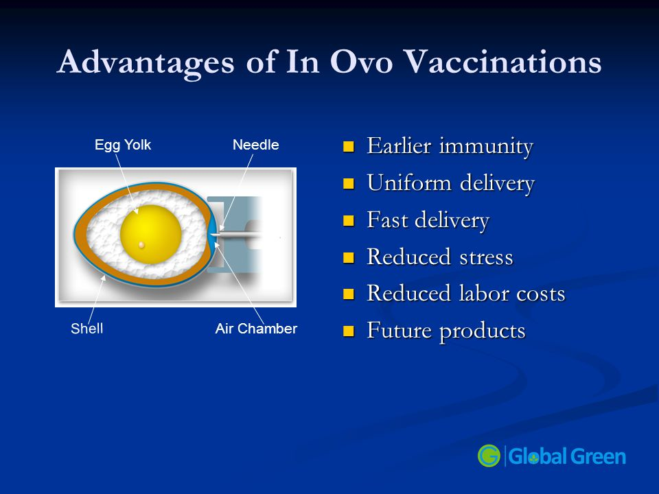 Advantages of In Ovo Vaccinations Earlier immunity Uniform delivery Fast delivery Reduced stress Reduced labor costs Future products Egg YolkNeedle Ai