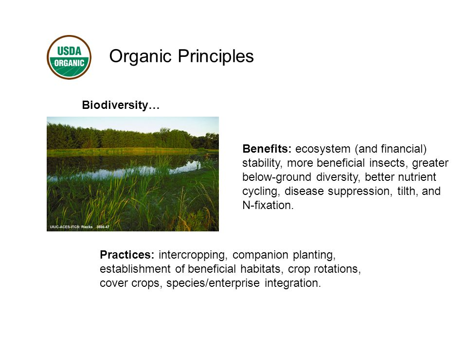 Organic Principles Biodiversity… Benefits: ecosystem (and financial) stability, more beneficial insects, greater below-ground diversity, better nutrient cycling, disease suppression, tilth, and N-fixation.