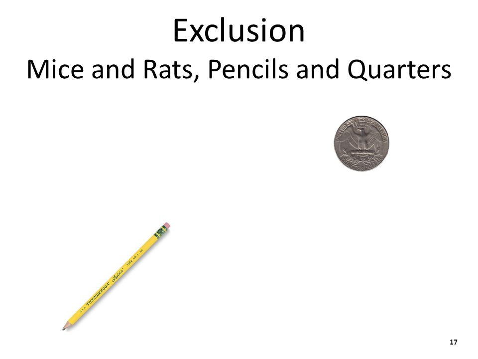 Exclusion Mice and Rats, Pencils and Quarters 17