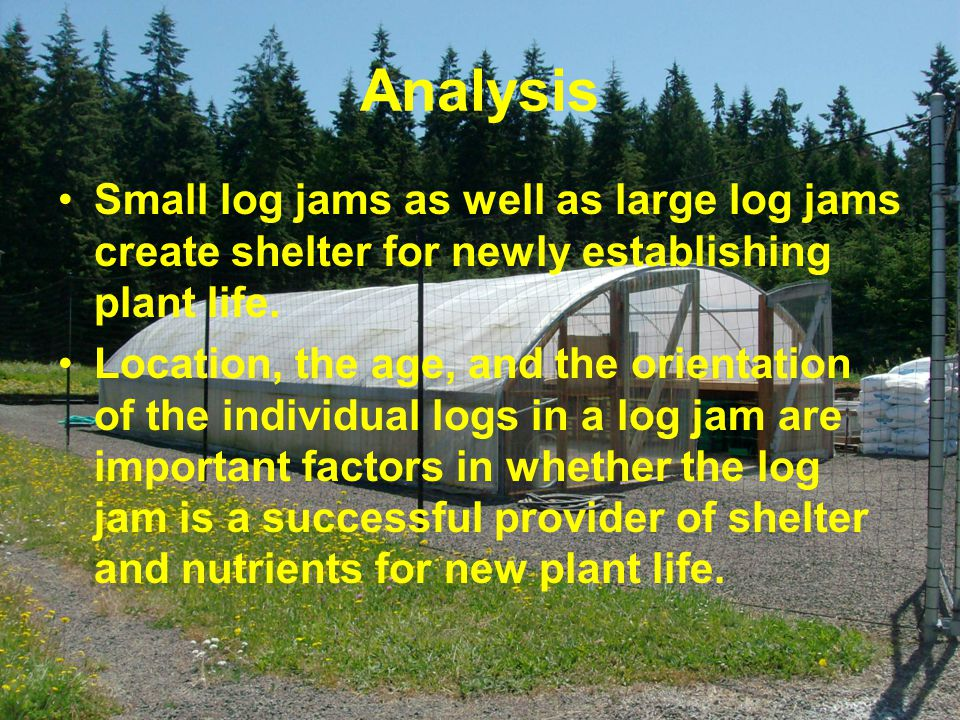 Analysis Small log jams as well as large log jams create shelter for newly establishing plant life.
