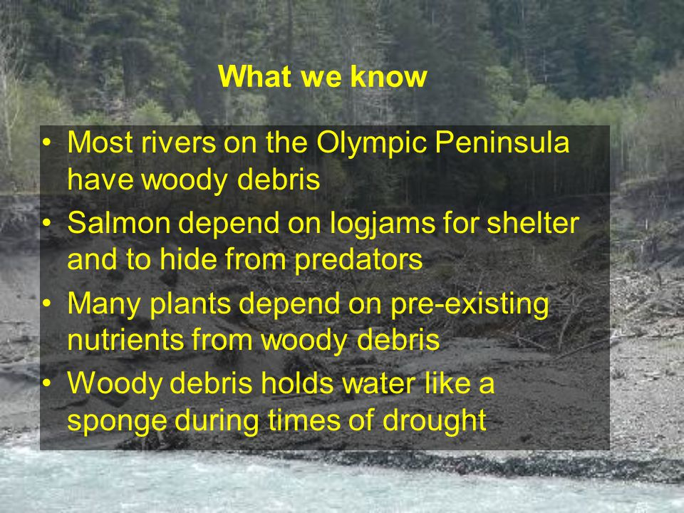 Most rivers on the Olympic Peninsula have woody debris Salmon depend on logjams for shelter and to hide from predators Many plants depend on pre-existing nutrients from woody debris Woody debris holds water like a sponge during times of drought What we know