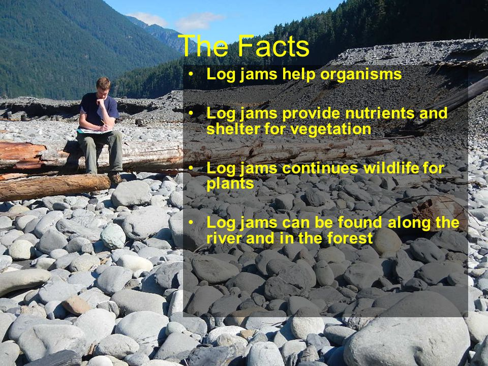 The Facts Log jams help organisms Log jams provide nutrients and shelter for vegetation Log jams continues wildlife for plants Log jams can be found along the river and in the forest