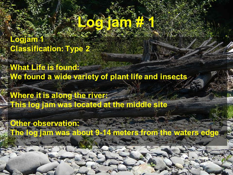 Log jam # 1 Logjam 1 Classification: Type 2 What Life is found: We found a wide variety of plant life and insects Where it is along the river: This log jam was located at the middle site Other observation: The log jam was about 9-14 meters from the waters edge