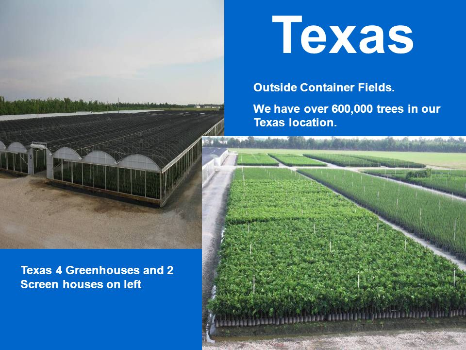 Texas 4 Greenhouses and 2 Screen houses on left Outside Container Fields. We have over 600,000 trees in our Texas location. Texas