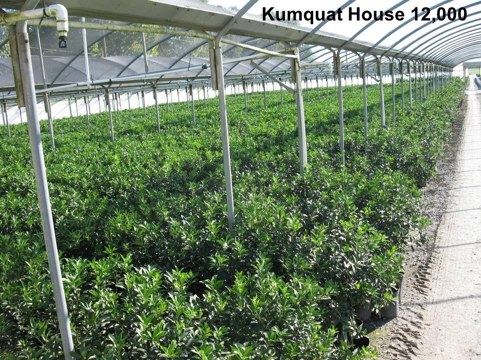 Kumquat House 12,000
