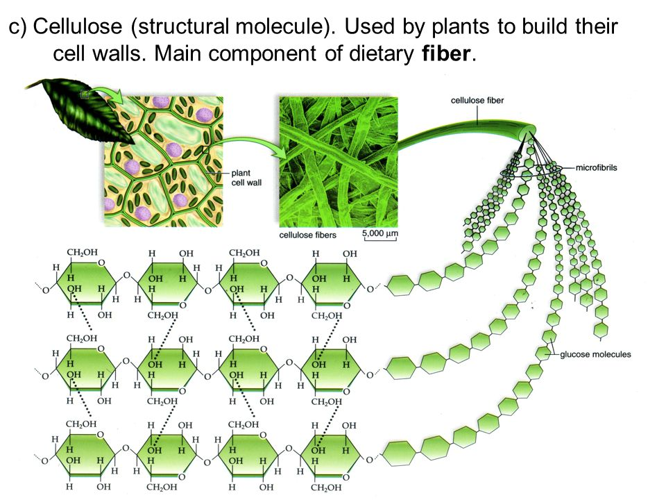 c) Cellulose (structural molecule). Used by plants to build their cell walls. Main component of dietary fiber.