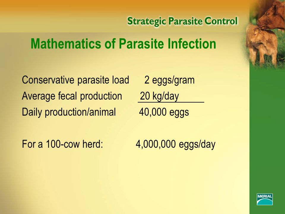 Mathematics of Parasite Infection Conservative parasite load 2 eggs/gram Average fecal production 20 kg/day Daily production/animal 40,000 eggs For a 100-cow herd: 4,000,000 eggs/day