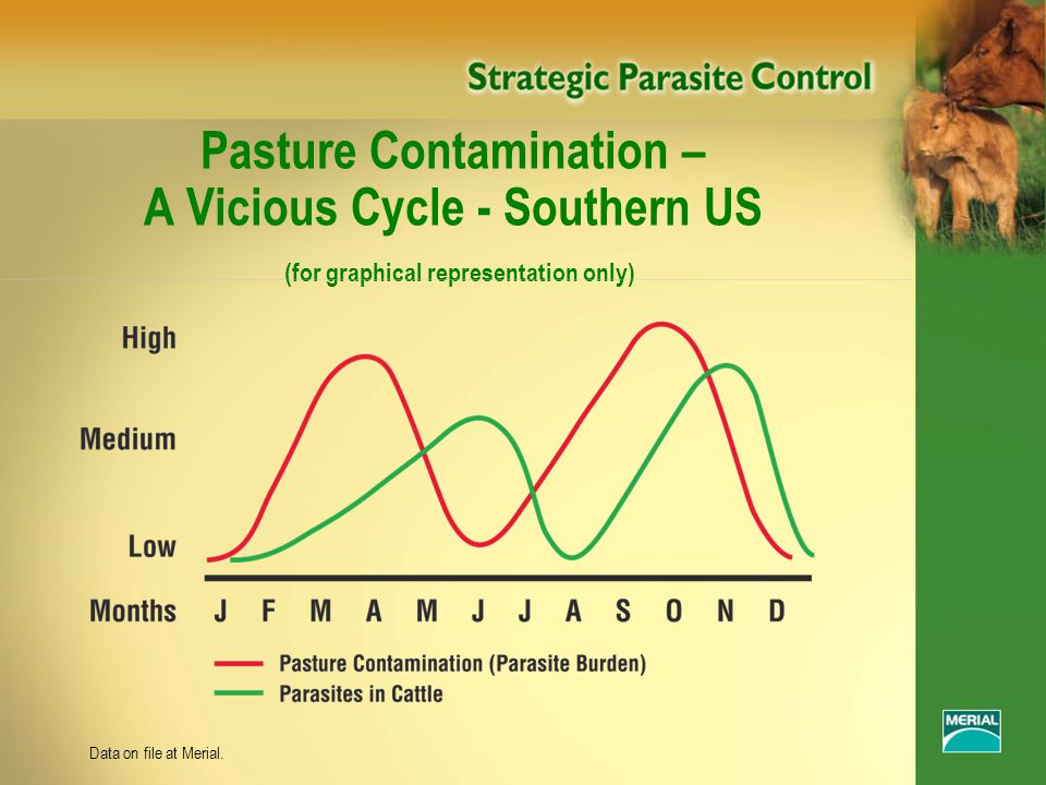 Pasture Contamination – A Vicious Cycle - Southern US (for graphical representation only) Data on file at Merial.