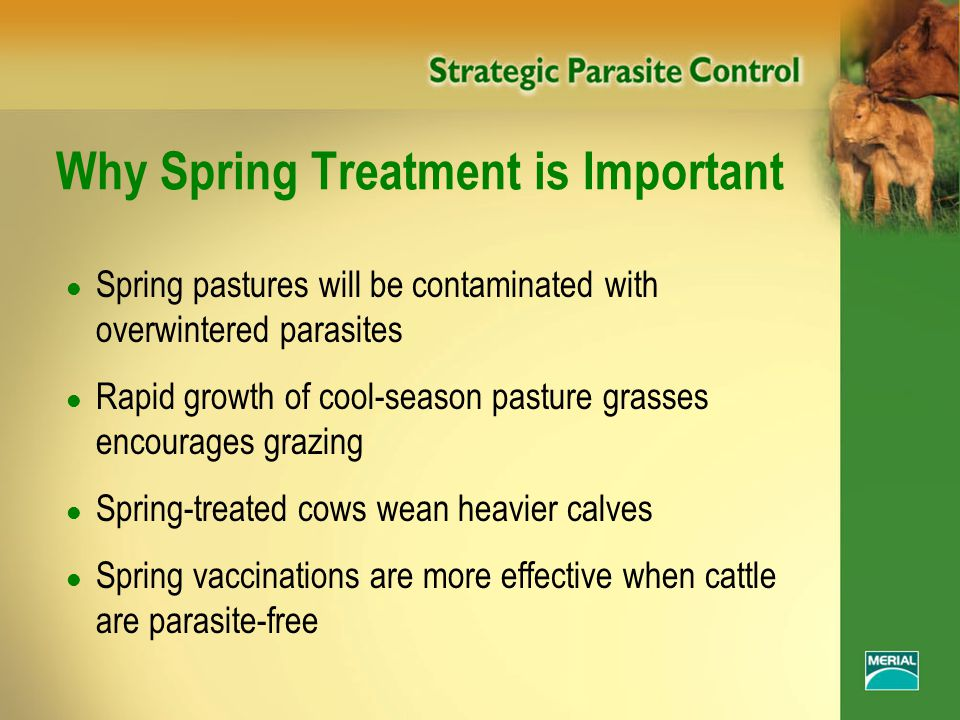 Why Spring Treatment is Important l Spring pastures will be contaminated with overwintered parasites l Rapid growth of cool-season pasture grasses encourages grazing l Spring-treated cows wean heavier calves l Spring vaccinations are more effective when cattle are parasite-free