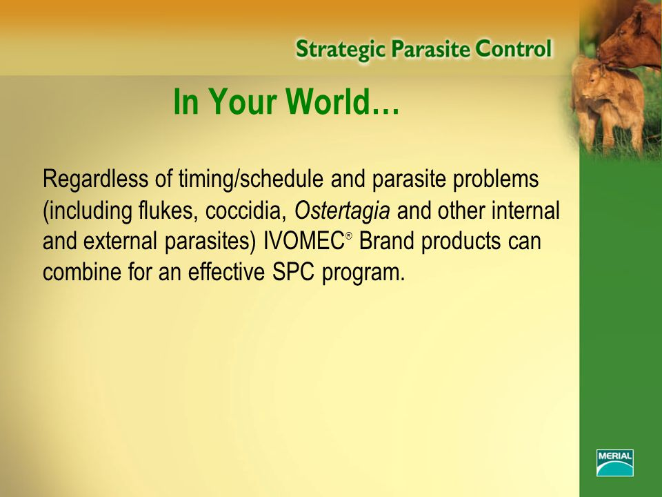In Your World… Regardless of timing/schedule and parasite problems (including flukes, coccidia, Ostertagia and other internal and external parasites) IVOMEC ® Brand products can combine for an effective SPC program.